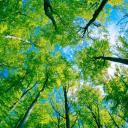 Что шелестит в лесу?